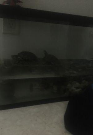 Cool turtles for Sale in San Bernardino, CA