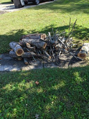 Free fresh cut wood for Sale in Toms River, NJ