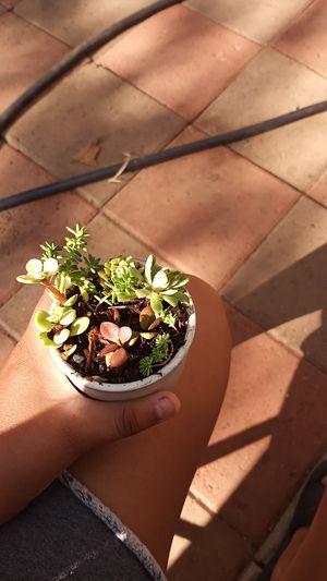5 different small succulents in a ceramic pot for Sale in Pomona, CA