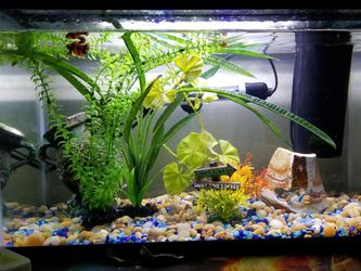 Fish Tank/aquarium Already Set Up for Sale in Littlerock,  CA