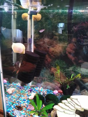 55 gallon fish tank and stand combo for Sale in Cheyenne, WY