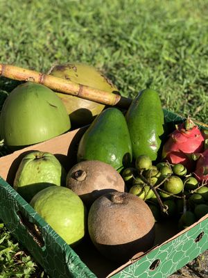 SPANISH LIME MAMEY COCO GUAVA DRAGON FRUIT for Sale in Lehigh Acres, FL