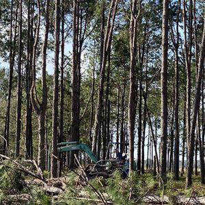 Free Pine Straw for Sale in Plant City, FL