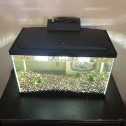 10 Gallon Fish Tank w/ Heater, Filter, LED Lights for Sale in Fresno,  CA