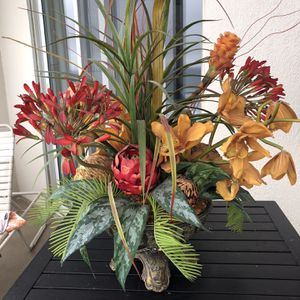 Decorative Plant for Sale in Miramar Beach, FL