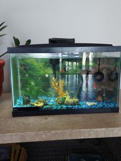 10 Gal. Fish Aquarium for Sale in Laveen Village,  AZ