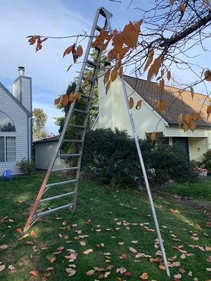 Orchard ladder for Sale in Tigard, OR