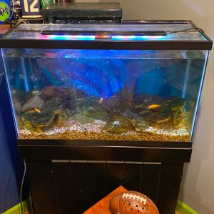 35ish Gallon Aquarium With Stand Lid Light And Aquaclear 110 Filter Fish Not Included for Sale in Seattle, WA