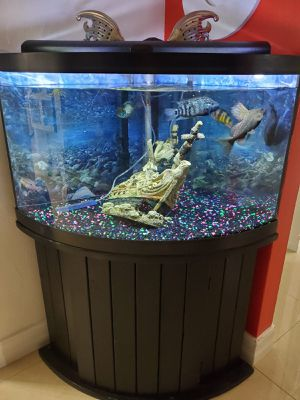 Fish tank for Sale in West Palm Beach, FL