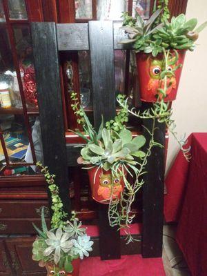 Succulents en base de madera grande mide 18x32 pulgadas for Sale in Bell, CA