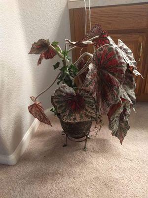 Room decor leaf plant with ceramic pot for Sale in Tucson, AZ