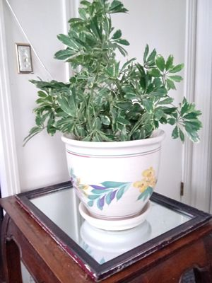 Pottery Planter has silk screened floral background for Sale in Hendersonville, TN