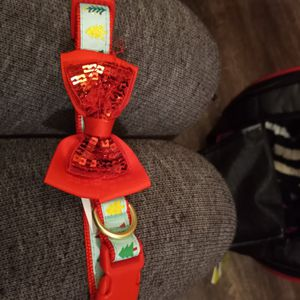 Medium Dog Collar for Sale in Salt Lake City, UT