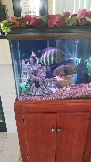 60 gallon show tank With Stan and lights for Sale in Sacramento, CA