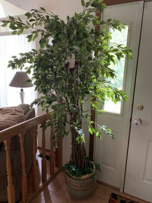Decorative indoor plant with pot for Sale in Puyallup, WA