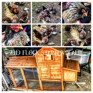 2019 flock starter for Sale in Cleveland, OH