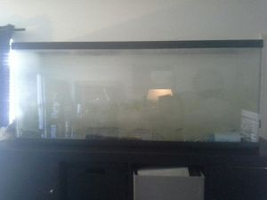 30-50 gallon Fish Tank plus Accessories All for $140 for Sale in Salt Lake City, UT