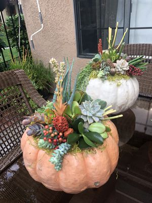 Pink Pumpkin with Succulents for Sale in Orange, CA