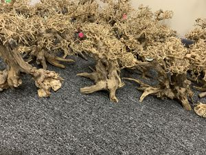 Bonsai Driftwood Aquarium Tree AM for Sale in North Royalton, OH