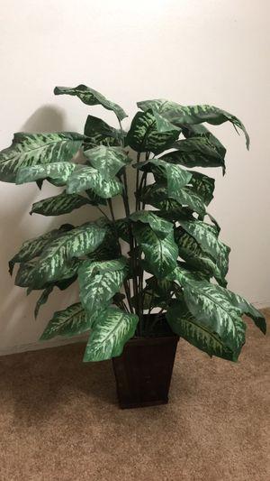 Fake plant for Sale in El Cajon, CA