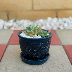 Blue ceramic pot with succulent for Sale in Los Angeles, CA