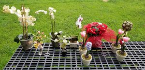 Potted Flower Arrangements, Orchids, Bulb, Topiary Tree, Garland for Sale in Billerica, MA