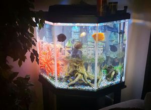39 gallon fish tank with canister filter for Sale in Severn, MD