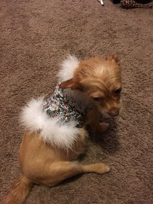Custom made dog clothes for Sale in Lakeland, FL