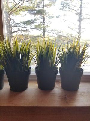 5 fake plants in pots for Sale in ROXBURY CROSSING, MA