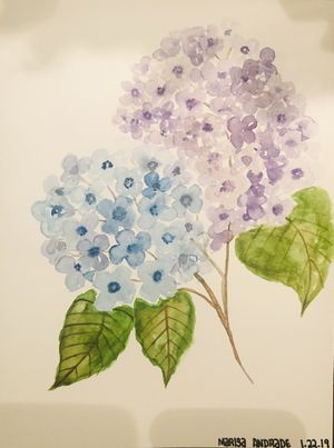 Hydrangea watercolor painting 9x12 for Sale in Manassas Park, VA