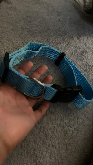 Dog collar for Sale in Santa Ana, CA