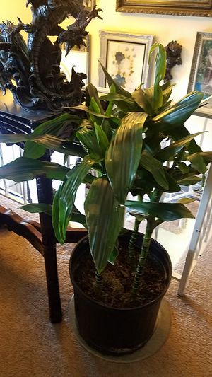 4 ft indoor for Sale in Colorado Springs, CO
