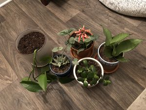 House plants for Sale in Portland, OR