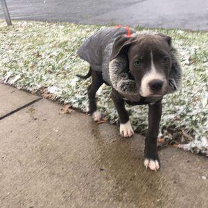 puppy jacket for Sale in Hyattsville, MD