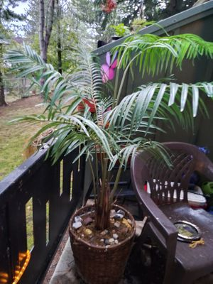 "Plant ""fake""but real as looks get. for Sale in Gresham, OR"