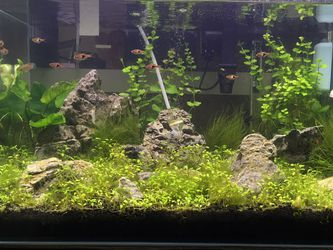 Fish Aquascape Tank With CO2 Regulator for Sale in Spring Valley,  CA