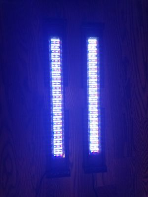 Saltwater Reef Lights for Sale in Wheaton, IL