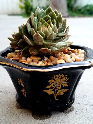 Succulent in vintage Chinese pot. for Sale in Rowland Heights, CA