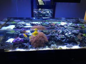 Zero edge fish tank 150gal for Sale in Knoxville, TN