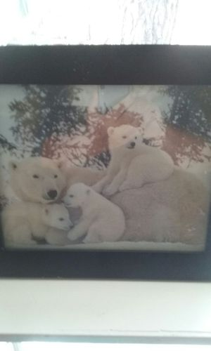 Polar bears for Sale in Lakeside, AZ