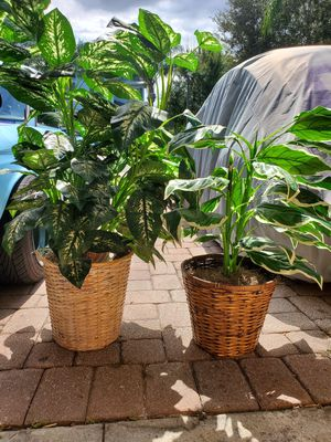 Artificial Plants for Sale in Windermere, FL