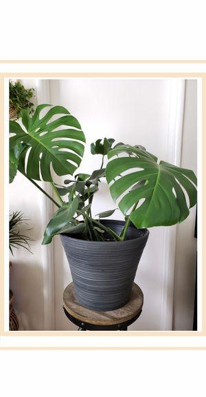 Large Dark Grey Planter Pot for Sale in South Pasadena, CA