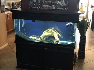 55 gallon aquarium for Sale in Pumpkin Center, CA