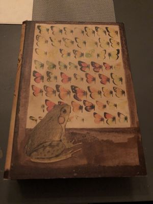 """Butterfly & Frog book box with vintage design - 12"""" for Sale in Katy, TX"""