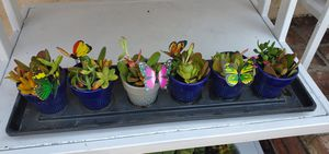 7pc cute 6 planters with succullentd with tray for Sale in Orange, CA