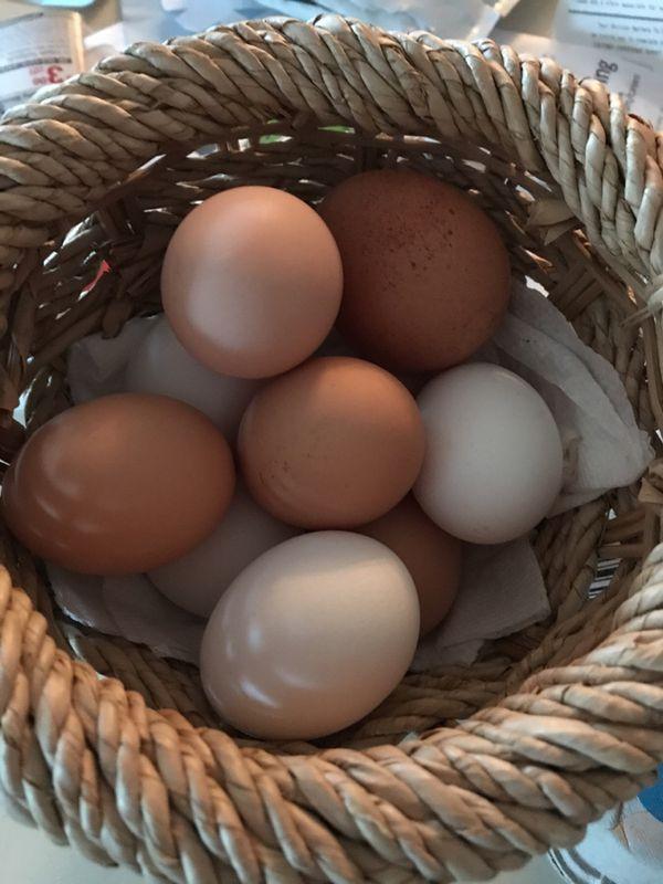 Farm Fresh Eggs $5 a dozen
