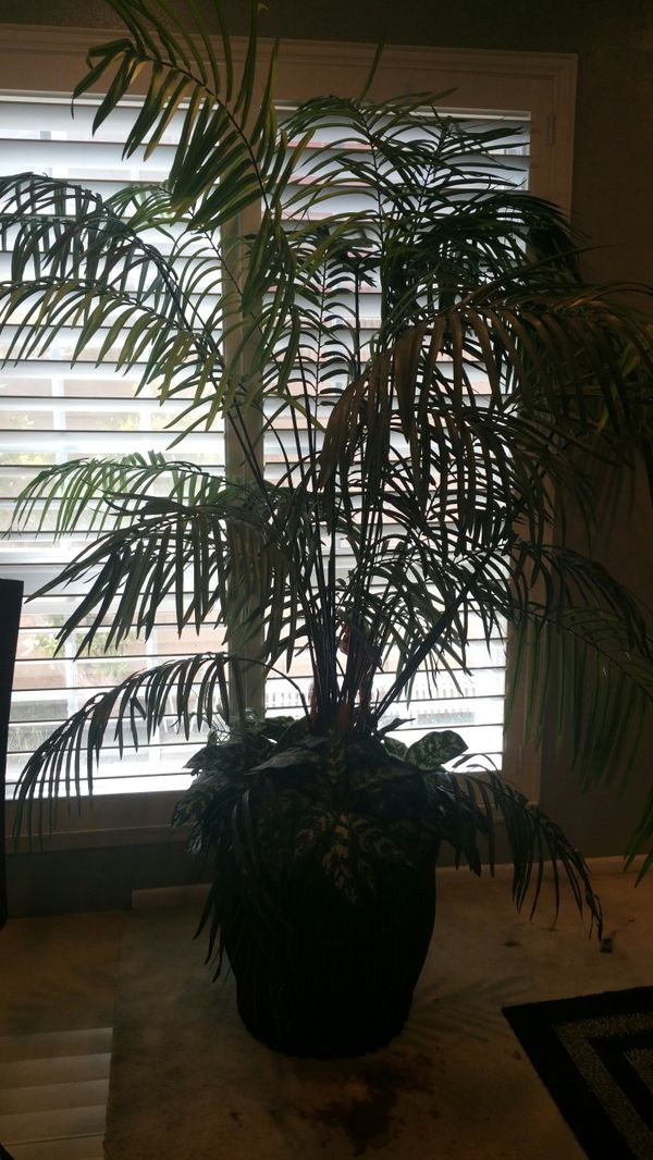 About 7' fake plant