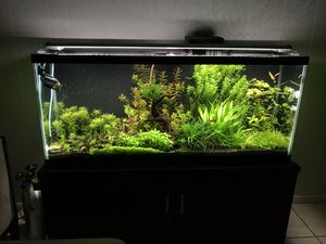 Plant trimmings for aquarium 20$ for Sale in Euless, TX