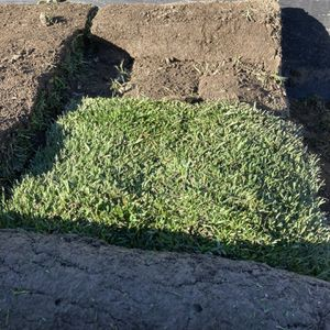 230 Square Foot Of Sod Fescue for Sale in Chino, CA