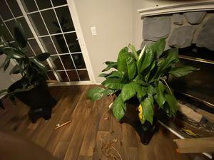 Plant for Sale in Murfreesboro, TN